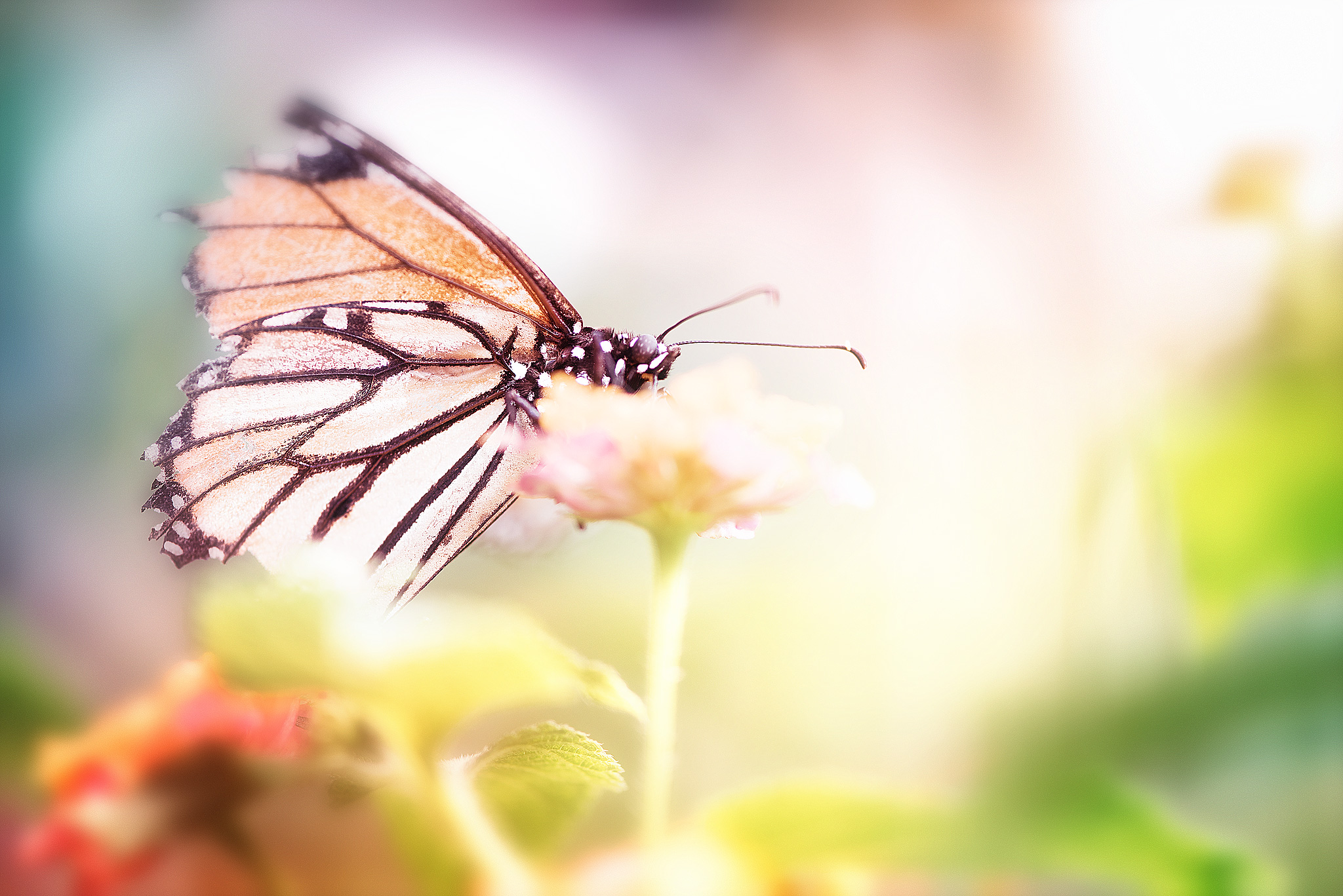 Broken Butterfly | Sybille Rotondo